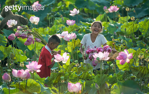 Boy and girl picking flowers in field, Thailand - gettyimageskorea