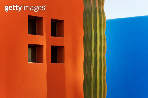 Cactus against colorful walls - gettyimageskorea