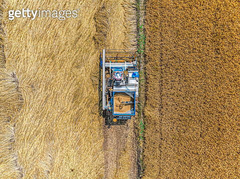 aerial top view harvester machine working in rice fields, Asia, thailand. - gettyimageskorea