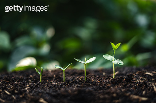 Close-Up Of Small Plants Growing On Field - gettyimageskorea