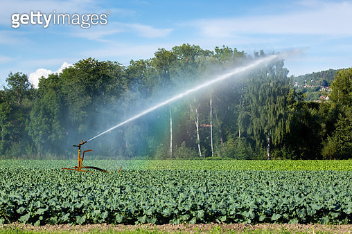 Agricultural sprinkler used one dry summer day - gettyimageskorea
