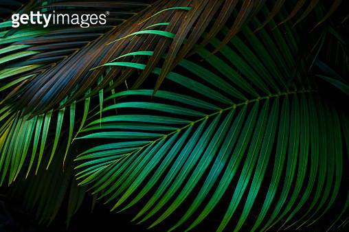 Close-Up Of Palm Leaves - gettyimageskorea