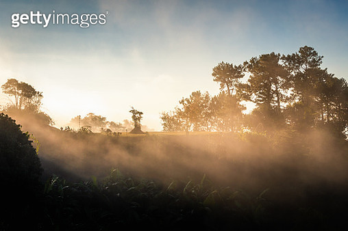 Sunlight With Fog In Forest Park At Sunrise - gettyimageskorea