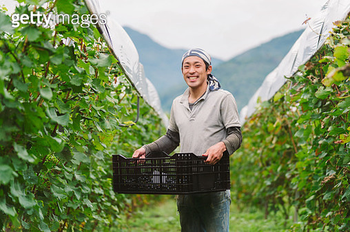Portrait of a young Japanese grape farmer in his vineyard - gettyimageskorea