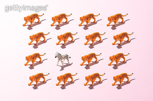 A Toy Zebra against a Crowd of Tigers on Pink Colored Background. - gettyimageskorea