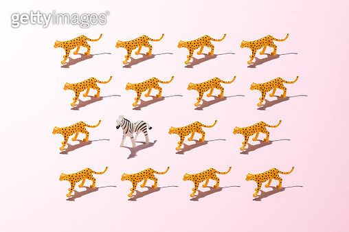 A Toy Zebra against a Crowd of Leopards on Pink Colored Background. - gettyimageskorea