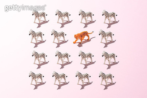 A Toy Tiger in a Crowd of Zebras on Pink Colored Background. - gettyimageskorea