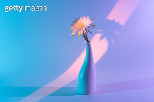 Bright Colored Light Casting a Cactus Flower in Vase Against Multi Colored Light Effect Background. - gettyimageskorea