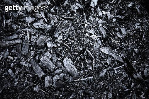 Closeup of burnt black forest floor after bush fire, Australia - gettyimageskorea