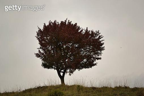 Tree - gettyimageskorea