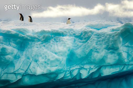 Penguins on the iceberg, Antarctica - gettyimageskorea