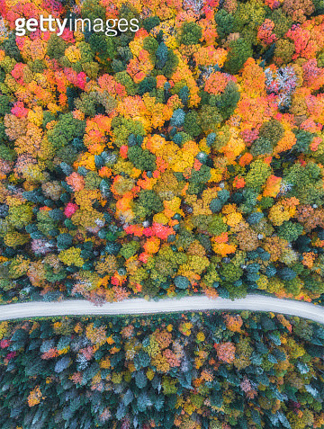 An aerial view of Canada's autumn, the leaves on the tree turn into red and orange during this season. A single path cross the colorful forest and surounded by the trees - gettyimageskorea