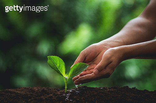 Close-Up Of Human Hands Planting Seedling In Soil - gettyimageskorea