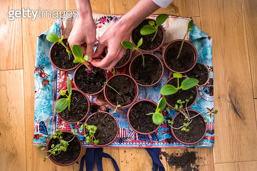 Planting at home, shot from above - gettyimageskorea