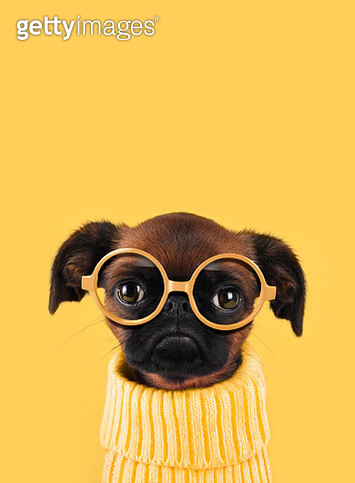 Funny dog with glasses - gettyimageskorea