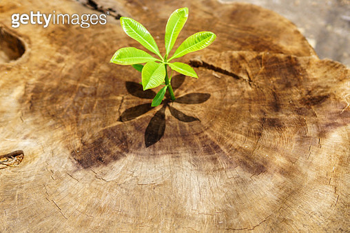 Close-Up Of Small Plant Growing On Tree - gettyimageskorea