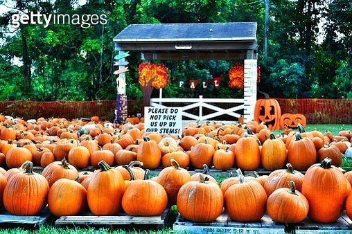 Pumpkins In Park During Autumn - gettyimageskorea