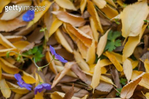 Violet Wildflowers - gettyimageskorea