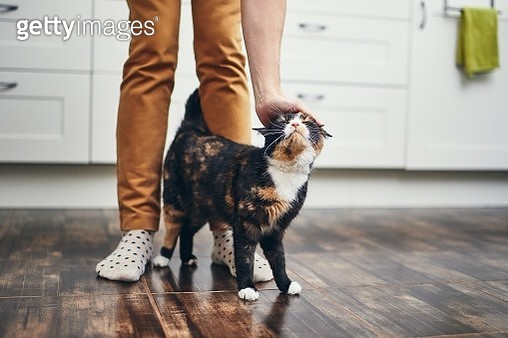 Low Section Of Man With Cat On Hardwood Floor In Kitchen At Home - gettyimageskorea