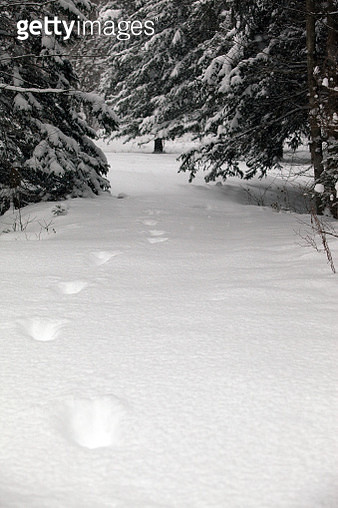 Snow Trail - gettyimageskorea
