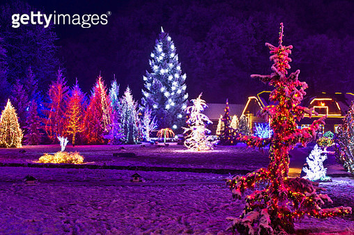 Christmas fantasy - park & forest in xmas lights - gettyimageskorea