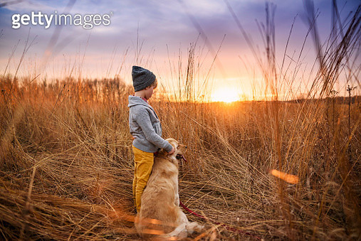 Boy standing in a field with his golden retriever dog, United States - gettyimageskorea