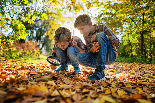 Little explorers observing beautiful autumn leaves in autumn forest. Nikon D850. - gettyimageskorea