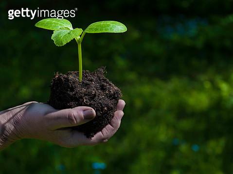 GET.9547.Plant - gettyimageskorea