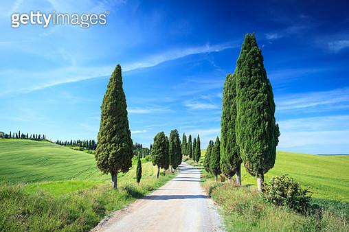 Spring road between Cypress trees in Tuscany - Green Field Landscape - gettyimageskorea