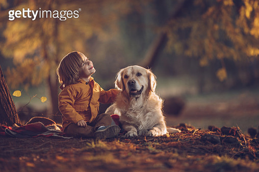 Cute little boy and his golden retriever in autumn day at the park. - gettyimageskorea