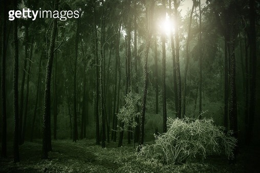 The mythic forest - gettyimageskorea