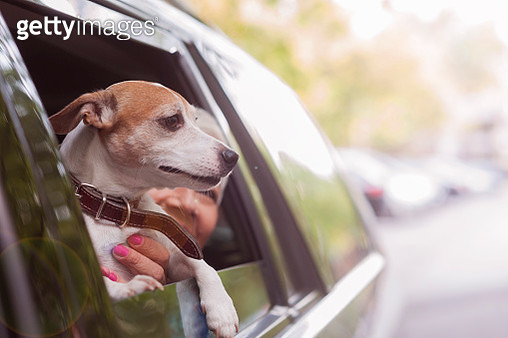woman traveling by car with a dog - gettyimageskorea