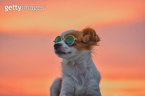 Close-Up Of Dog Wearing Sunglasses Against Sky During Sunset - gettyimageskorea