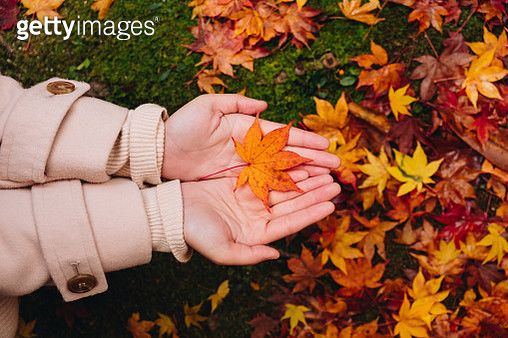 Cropped Hands Of Woman Holding Maple Leaf At Public Park During Autumn - gettyimageskorea