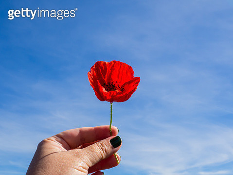 A woman with her nails painted with green enamel with a poppy in her hand and the blue sky - gettyimageskorea