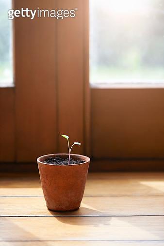 Single young seedling growing in pot. - gettyimageskorea