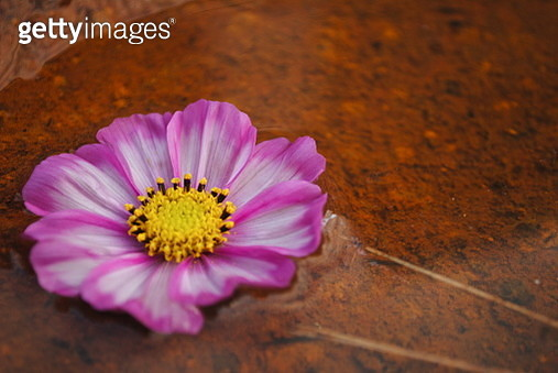 Beauty and rust - gettyimageskorea