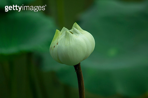 Close-Up Of Flowering Plant - gettyimageskorea