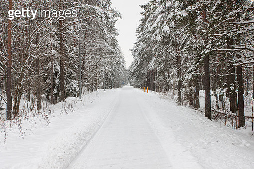 Winter forest with snow on pine trees - gettyimageskorea