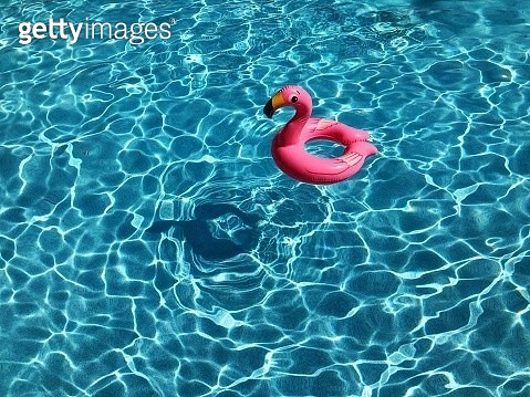 High Angle View Of Red Flamingo Floating On Swimming Pool - gettyimageskorea
