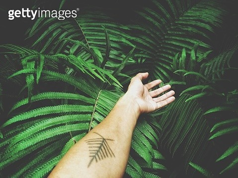 Cropped Hand Of Woman On Plants - gettyimageskorea
