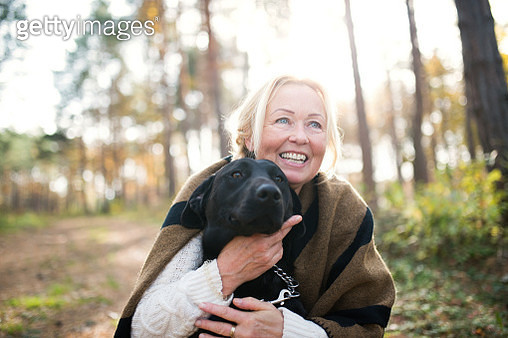 A portrait of a happy senior woman with a dog in autumn nature. - gettyimageskorea