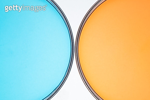 Blue and Orange Colored Petri Dish Comparison Directly Above View, Close-up Shot. - gettyimageskorea