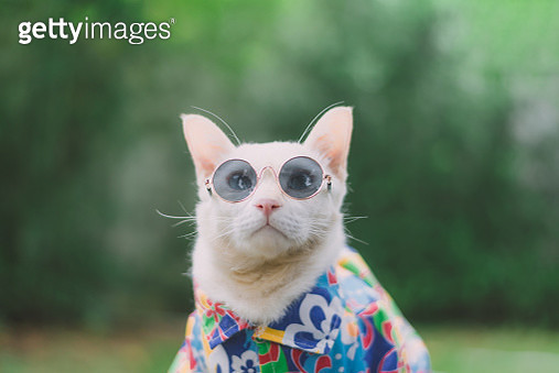 Close-Up Of Cat Wearing Sunglasses - gettyimageskorea
