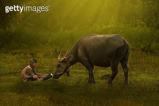 Thai boy reading with him buffalo. - gettyimageskorea