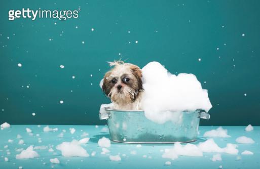 Puppy in foam bath - gettyimageskorea