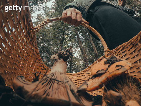 Guy hunting edible mushrooms in the forest during autumn with creative point of view from inside the basket. - gettyimageskorea