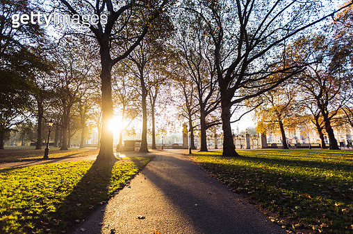 Green Park, just outside of Buckingham Palace at sunrise. - gettyimageskorea