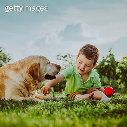 Baby boy playing with his dog on the grass - gettyimageskorea