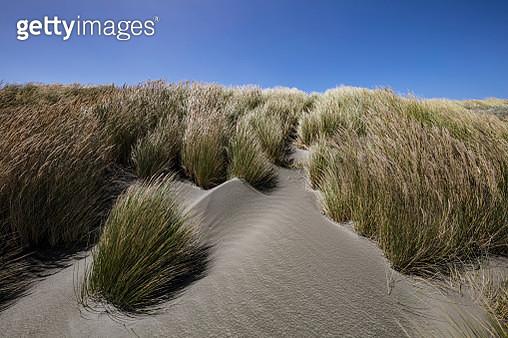 Grass and sand dunes on Waitarere Beach - gettyimageskorea